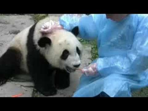 Playing with the pandas