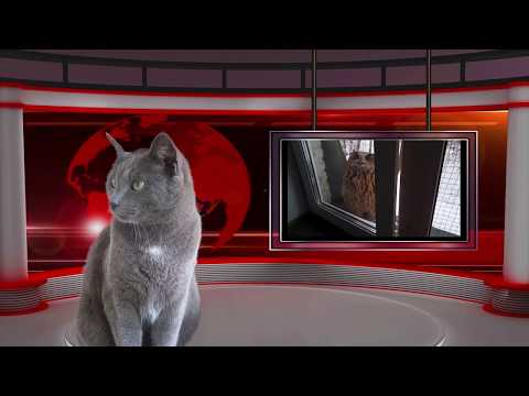 Кошачьи НОВОСТИ.Смешные видео про животных.