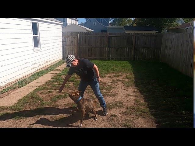 Using Food As A Reward/ Dog Training