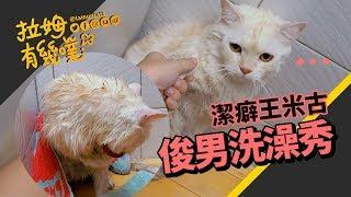 貓咪洗澡超淡定 吹乾毛自己來|拉姆有幾噗 ♧