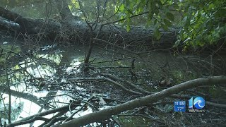 Virginia Beach couple hoping to get help with creek behind their home