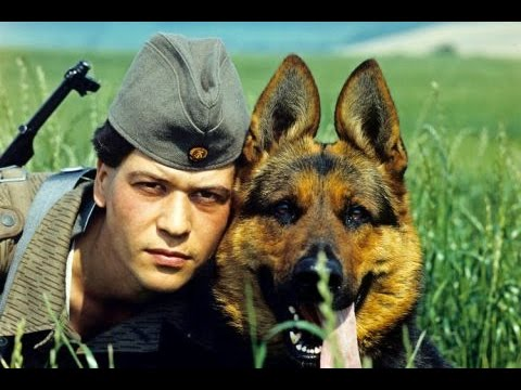 Grenzhunden Berlin Border Dogs