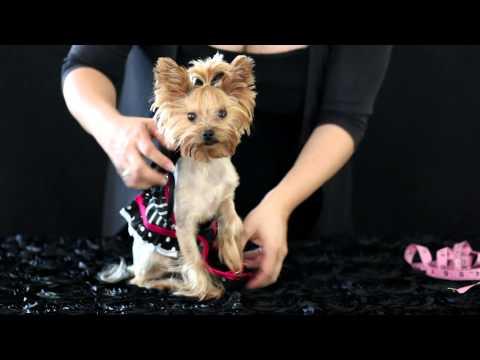 Chloe Polka Dot's Fashion Frolic New Dog Clothing Design