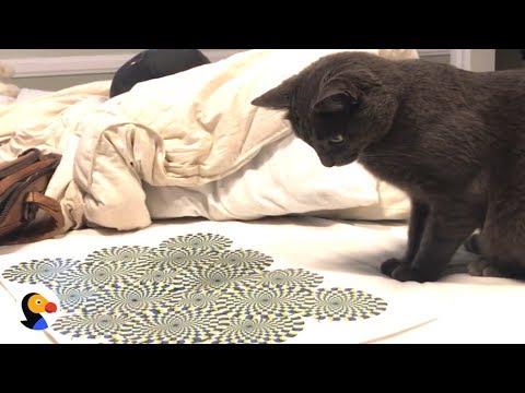 optical illusions youtube # 56