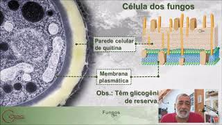 Fungos 1