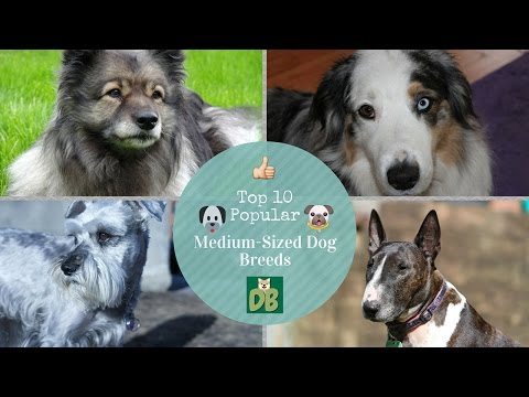 Top 10 Popular Medium-Sized Dog Breeds