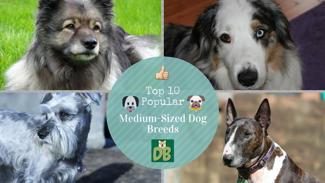 Medium Sized Dog Breeds List