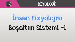İnsan Fizyolojisi - Boşaltım Sistemi -1
