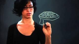 How to Draw Desert Tortoises