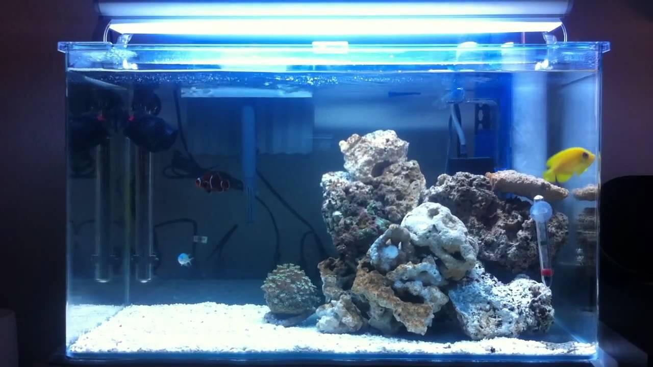 Acuario marino 90 litros youtube for Peces de acuario marino