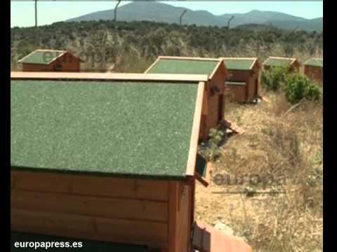 Una granja de vila cr a gallinas en chalets youtube for Como hacer una granja de peces