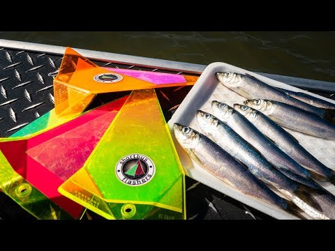 How To Catch SPRING SALMON Trolling With Herring & Flashers