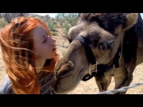 Camels & Friends on Animal Planet!