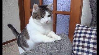 【のらとくーの様々な楽しい場面】Various scenes of cats and chihuahuas