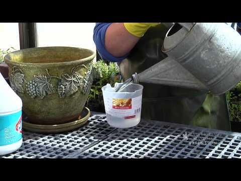 Proper Cleaning of Pots and Containers | From the Ground Up