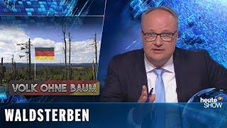 Der Regenwald brennt und der deutsche Wald stirbt vor unseren Augen