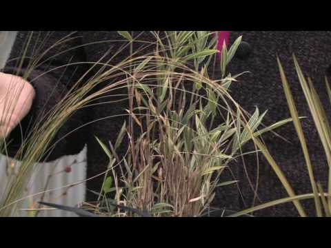 How to grow grass how to grow ornamental grass from seed youtube workwithnaturefo