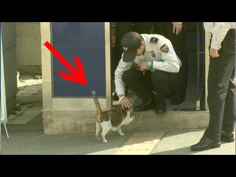This Stray Cat Approached A Policeman In The Street And Led Him To The Most Beautiful Surprise..
