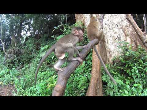 Thailand 2016 Khao Sok National Park Langschwanzmakaken Khao Lak
