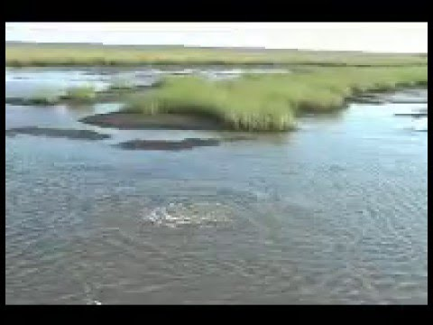 Mississippi gulf coast red fishing youtube for Mississippi out of state fishing license
