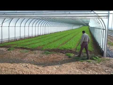Wegmans Organic Farm: Baby Greens
