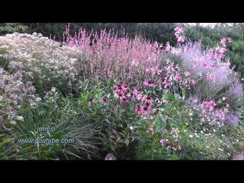 Nature and Trees -  RHS Rosemoor Garden In Devon
