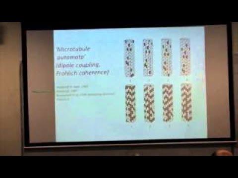 Stuart Hameroff lectures on quantum consciousness - 2017