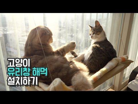 고양이 유리창 해먹│수리노을 가족과 칠냥이 반응