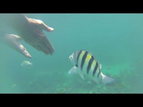 Snorkeling, Bahamas Clifton Park, Bahamas Underwater