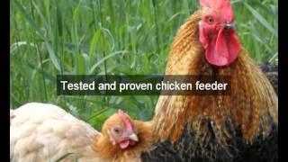 Chicken Feeders | Siskiyou | CA | automatic chicken feeder | feeding chickens | poultry feeders