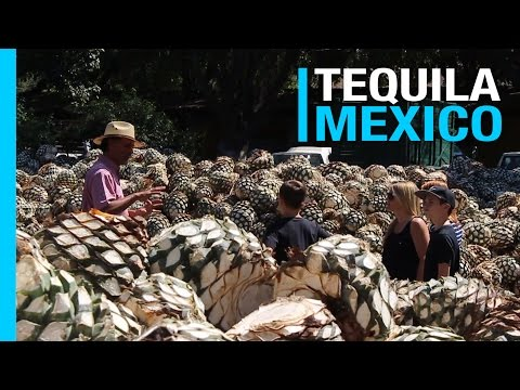 TEQUILA MEXICO & DISTILLERY TOUR | EP 46 TRAVEL VLOG