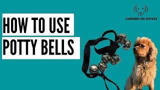 How To: Teach your dog to use Toilet bells