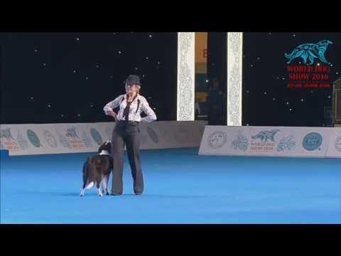 FCI Dog dance World Championship 2016 –Heelwork to music final - ButrimovaTamila and Illai (Russia)