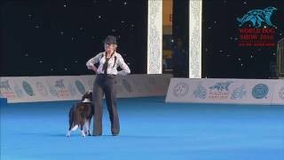 FCI Dog dance World Championship 2016 –Heelwork to music final - ButrimovaTamila and Illai (Russia)