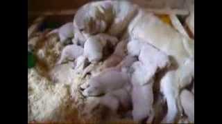 Golden Retriever-züchter Aus Dem Sauerland