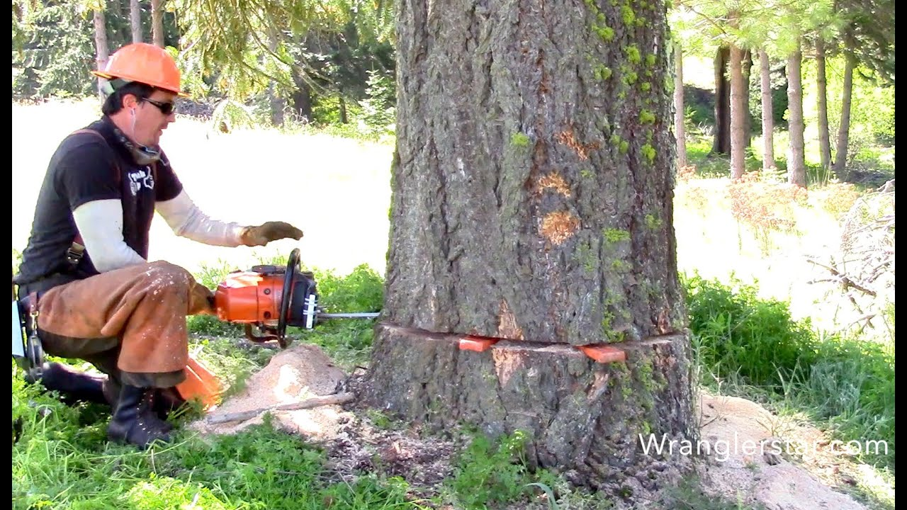 Tractor Man On Cutting Trees : Felling giant trees youtube