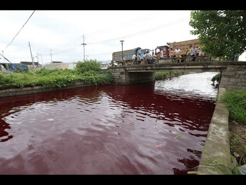 Apocalyptic Sign River In China Mysteriously Turns Bloody Red Overnight