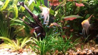 аквариум(, 2011-10-02T22:47:24.000Z)