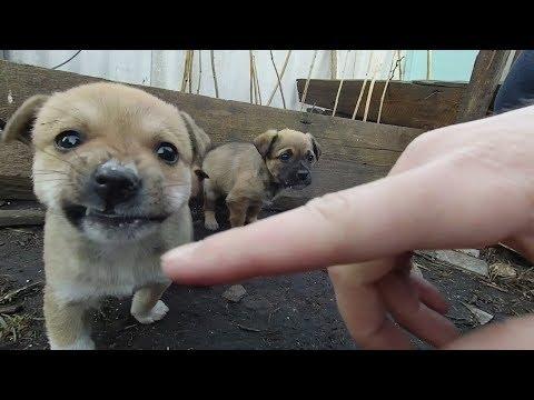 Little Puppies Meet Me