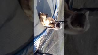 Kot i pies na trampolinie