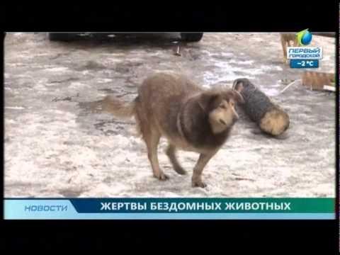 Фрагмент Новостей 1 городского канала от 09.02.2015