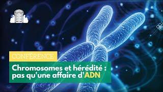 Les chromosomes et l'hérédité : pas qu'une affaire d'ADN