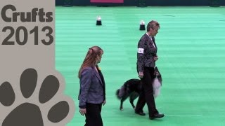 Obedience Dog Championships - Day 3 - Crufts 2013 (mary Ray & Colliwood Blue Jeans)