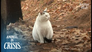 Cat Never Believes Her Owner Abandoned Her, Still Waiting In The Mountain | Animal in Crisis EP145