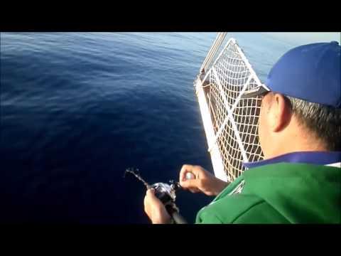 Belgesel Tadında Balık avı. Yemin takılması,Balığın vuruş anı ve mükemmel balıklar.. by Kefalos