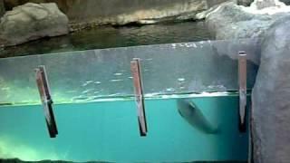 Los Angeles Zoo Seal Lion.... Uh... Dog