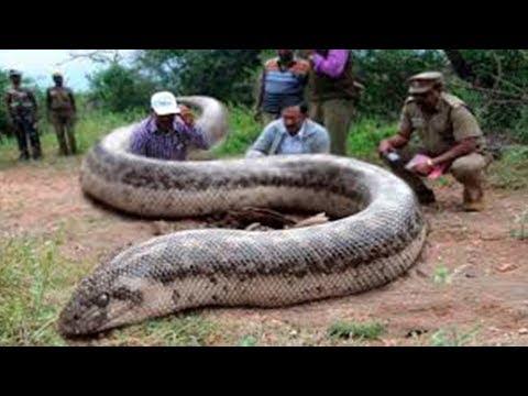 40 Größte Tiere Die Existieren!!