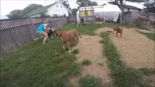 Boomer's Progress with Socialization at Misguided Mutts Dog Behvaior Training