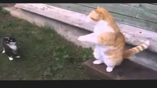Коты наркоманы  Видео.