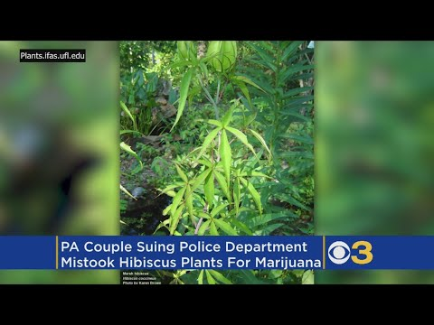 couple-sues-after-police-mistake-hibiscus-for-marijuana